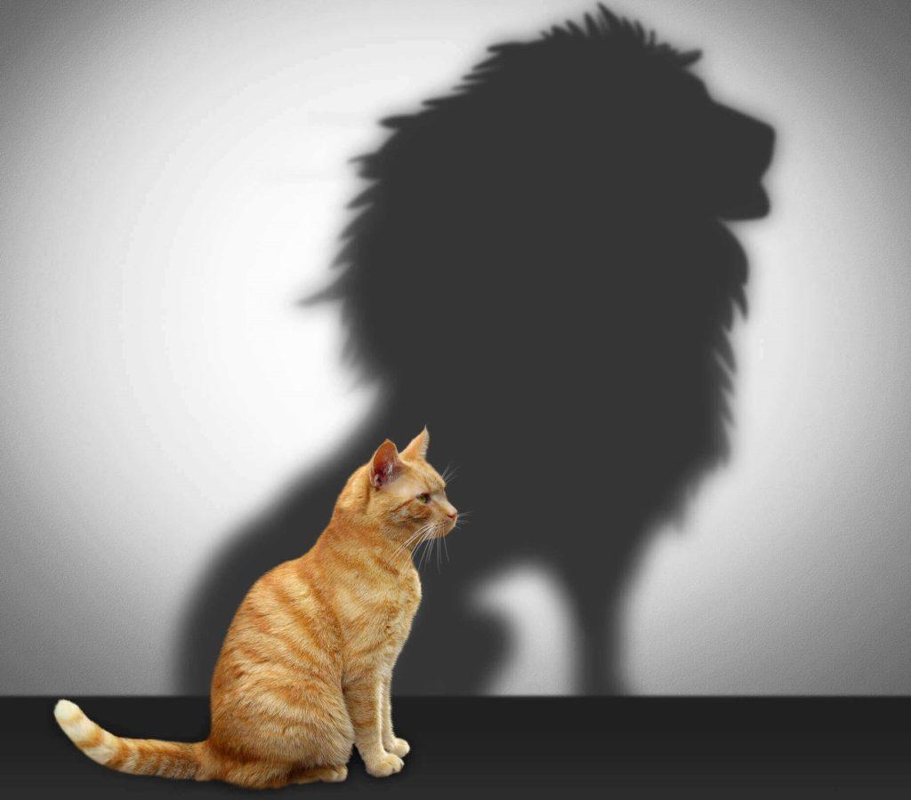 Autoconfiança e Psicologia